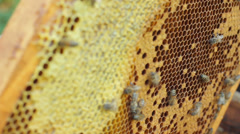Beekeeper working with bee honeycomb, agriculture beekeeping - stock footage