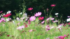 Flowers field of flower Stock Footage