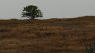 Stock Video Footage of Tree in field
