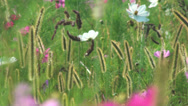 Stock Video Footage of Flowers field of flowers