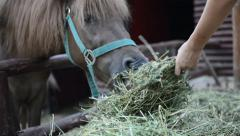 Horse feed by child, close up Stock Footage