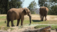 Elephants eating California wildlife sanctuary HD 9050 Stock Footage