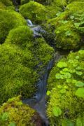 Stock Photo of USA, Oregon, Mount Jefferson Wilderness, Trickle with mossy rocks