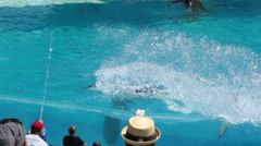 Orca Killer Whale splashing crowd SeaWorld HD 8938 Stock Footage