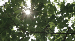Sun shining through the branches and leaves of trees in a forest - stock footage