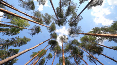 Ship pines in height, cloud and the blue summer sky Stock Footage