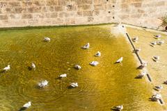 fowls in the water - stock photo