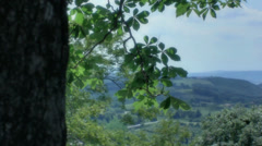 Revealing a Tuscany Landscape from behind a Tree - 29,97FPS NTSC - stock footage