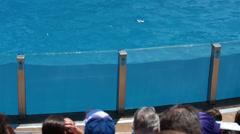 SeaWorld Dolphins splashing on tourist crowd HD 8951 Stock Footage