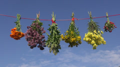 Summer medical herb bunches on string and sky background Stock Footage