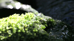 Water over mosses Stock Footage