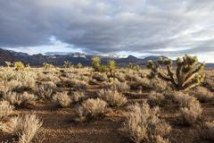 Southern nevada mojave desert morning Stock Photos
