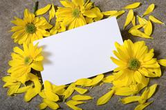 notecard with daises - stock photo