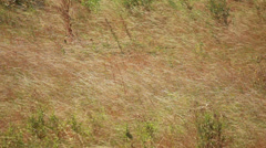 Dry Grass Stock Footage