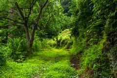 Road at batumi botanical garden Stock Photos