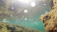 Stock Video Footage of underwater world
