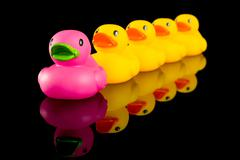 ducks in a row - stock photo