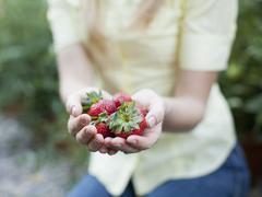 Woman holding strawberries - stock photo