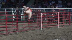 Rodeo, rodeo clown in fat costume Stock Footage