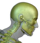 Digitally generated image of human head with human skull visible Stock Illustration