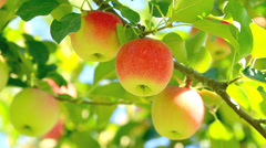 Delicious apples. Stock Footage