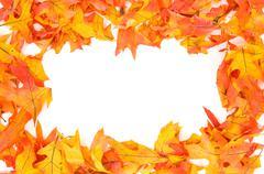 fall - autumn leaf border - stock photo