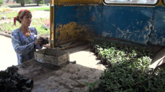 Woman takes plants out of a Soviet truck in Dushanbe Stock Footage
