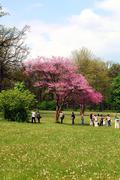 tree blossom and people - stock photo
