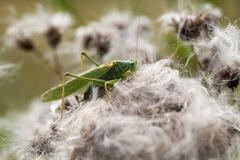 Green grasshopper - macro shot - stock photo