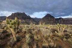 Red rock canyon national conservation area - southern nevada usa Stock Photos