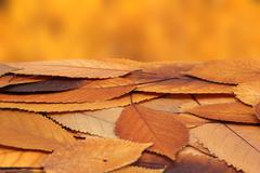 Stock Photo of faded autumn leaves