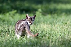 mottled cat in the grass - stock photo
