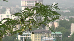 City of Dushanbe, seen from behind twigs Stock Footage