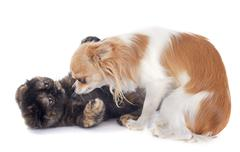 Cat and dog playing Stock Photos