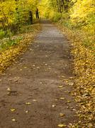 Forest road with autumnal trees and foliage Stock Photos