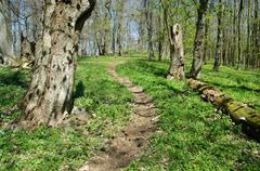 Small forest path in the woods Stock Photos