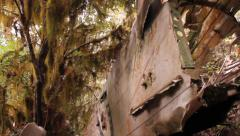 Fuselage of crashed aircraft in jungle - stock footage