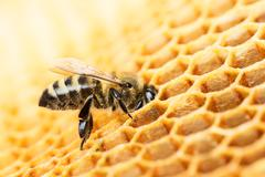 working bee - stock photo