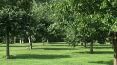 Rows of fruit trees in traditional mixed orchard Stock Footage