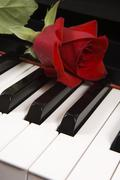 Rose on piano Stock Photos