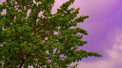 Magic Tree Stock Footage