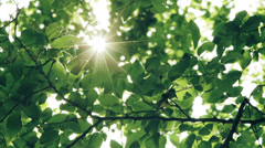 Sun shining through the branches and leaves of trees in a forest Stock Footage