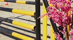 Pink flowers near striped barrier for equestrian contest Stock Footage