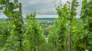 Stock Video Footage of Vineyard Time Lapse