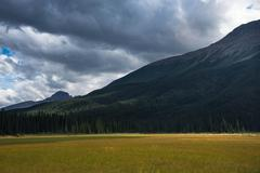 High Meadows in the Canadian Rockies Stock Photos