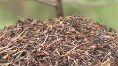 Anthill Stock Footage