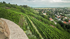 Vineyard Time Lapse - stock footage