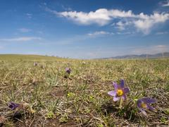 Spring in the mongolian steppe - stock photo