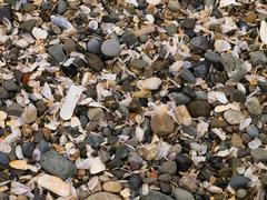 Close-up of sea debris on the beach Stock Photos