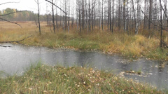 Autumn rain Stock Footage